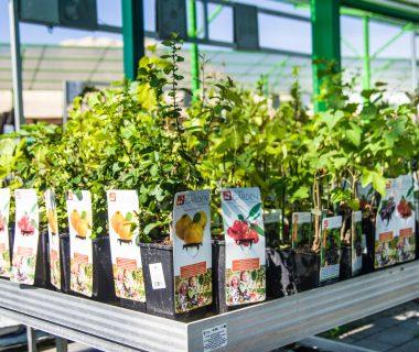 Sprzedaż roślin