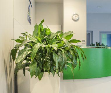 Projekt zieleni w biurze