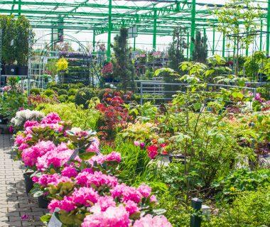 Sprzedaż kwiatów Wrocław