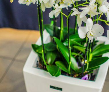 Projektowanie zieleni w biurze
