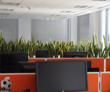 Zieleń w biurze