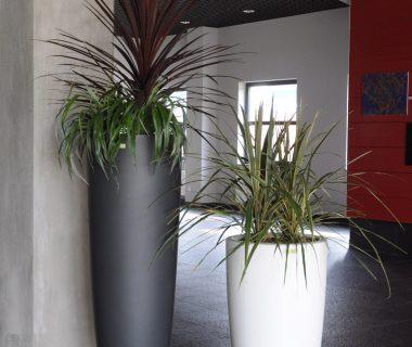 Rośliny w firmie